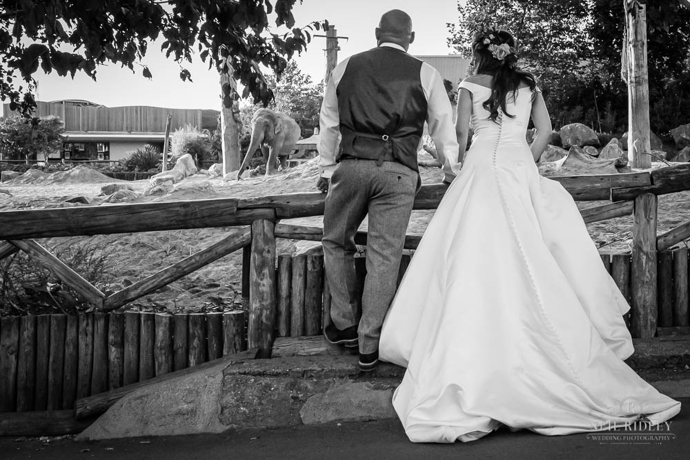 Black and white image of Bride and Groom at Chester Zoo